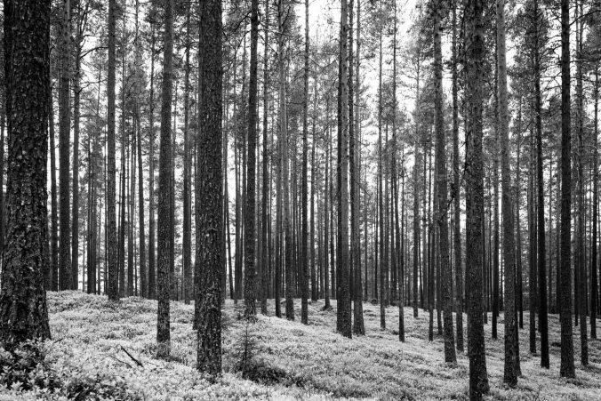Trolls by Stefan Spjut review – an unworthy slog